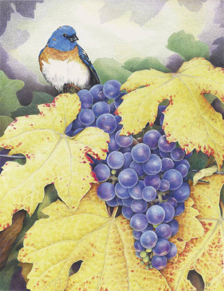 Grape Drawing - Vineyard Blue by Amy S Turner