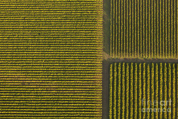 Winemaking Photograph - Vineyard From Above by Diane Diederich