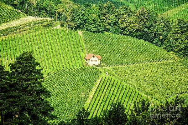 Photograph - Vineyard Home by Scott Kemper