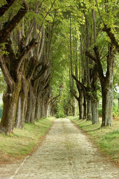 Photograph - Vineyard Pathway by John Magyar Photography