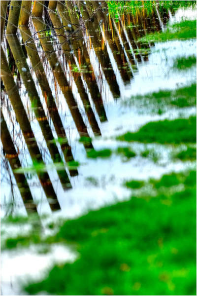 Photograph - Vineyard Poles 7218 by Jerry Sodorff