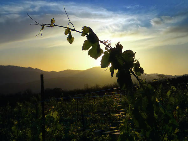 Photograph - Vineyard by Skip Hunt