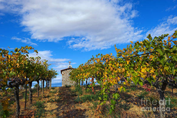 Grapevine Photograph - Vineyard Temple by Mike Dawson