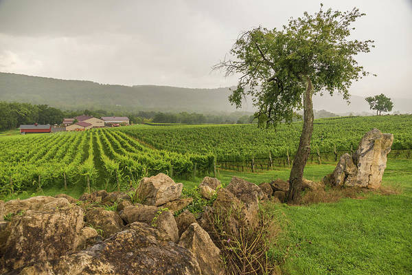 Photograph - Vineyard Views by Kristopher Schoenleber