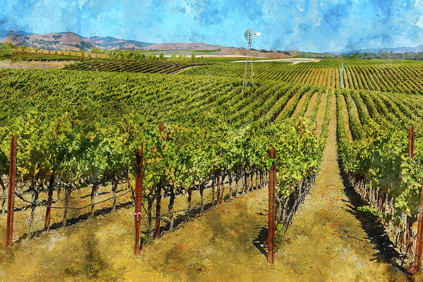 Photograph - Vineyard With A Windmill In Napa Valley by Brandon Bourdages