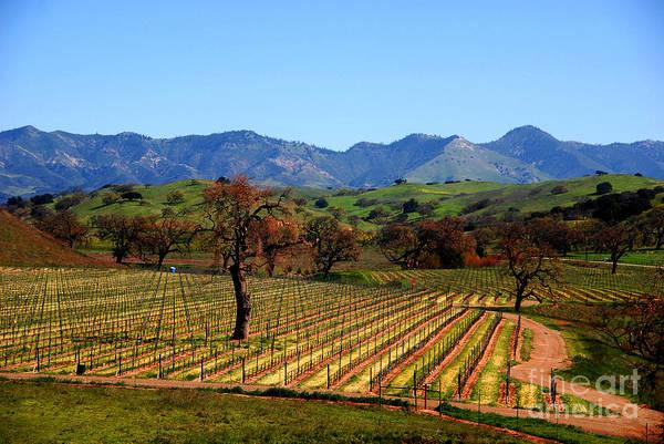 Photograph - Vineyards In Santa Ynez Valley Ca by Susanne Van Hulst