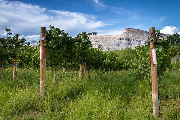 Photograph - Vineyards In The Grand Valley by Teri Virbickis