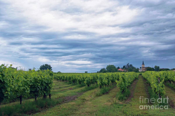 Wall Art - Photograph - Vineyards by Wedigo Ferchland