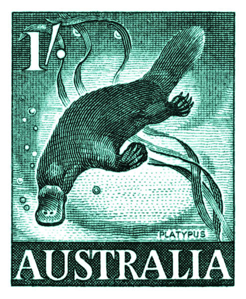 Australian Wildlife Digital Art - Vintage 1959 Australia Platypus Postage Stamp by Retro Graphics