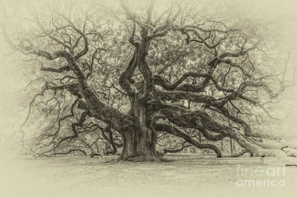Photograph - Vintage Angel Oak Tree by Dale Powell