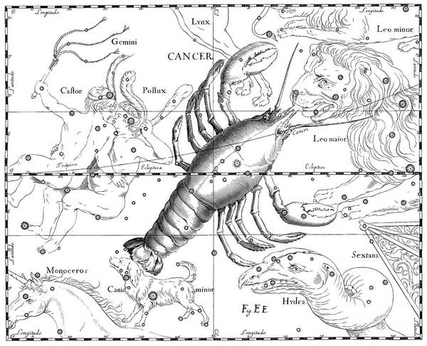 Backdrop Drawing - Vintage Astrological Map Showing The Signs Of The Zodiac by Johann Hevelius
