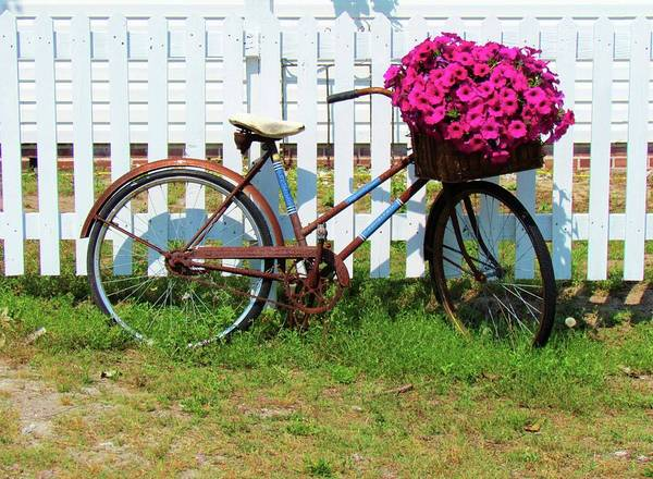 Photograph - Vintage Bicycle With Flowers by Cynthia Guinn