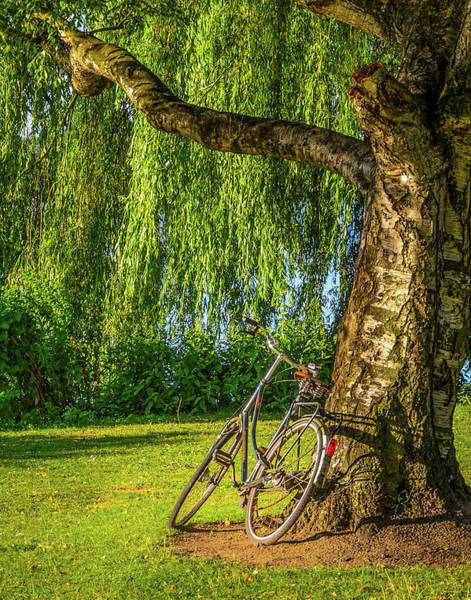 Photograph - Vintage Bike Leaning On Tree by Alexandre Rotenberg