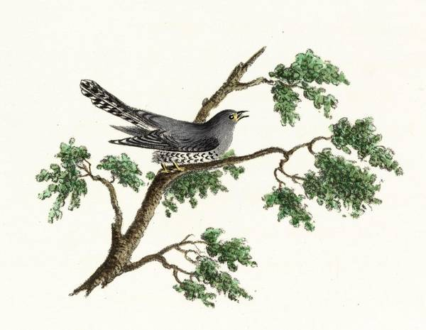 Wall Art - Photograph - Vintage Black Bird On Tree Limb by Gillham Studios
