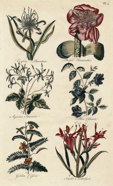 Wall Art - Digital Art - Vintage Botanical Engraving From John Hill's Eden by Antique Images