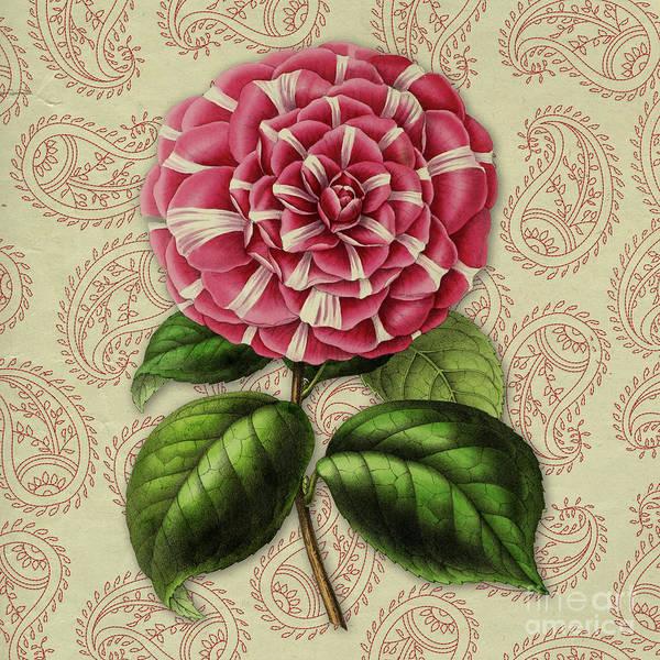 Wall Art - Digital Art - Vintage Botanical Pink Flower Camellia Japonica by Amy Cicconi