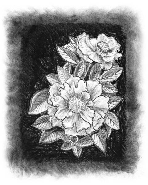 Pencil Drawing Painting - Vintage Camellia  by Irina Sztukowski