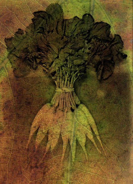 Photograph - Vintage Carrots by Char Szabo-Perricelli