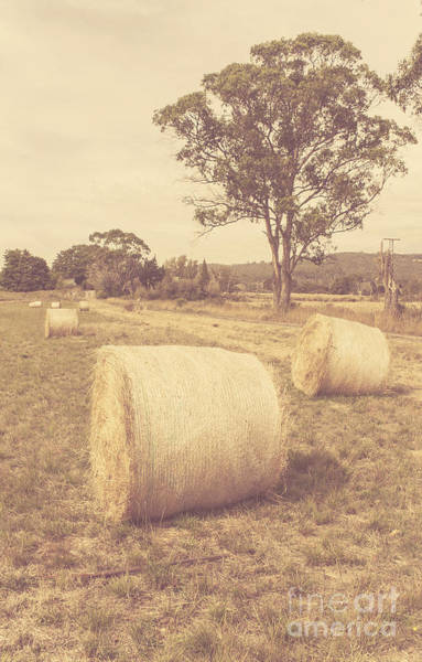 Farmyard Photograph - Vintage Country Farmyard In Outback Australia by Jorgo Photography - Wall Art Gallery