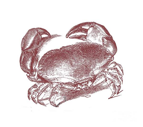 Wall Art - Digital Art - Vintage Crab Tee by Edward Fielding