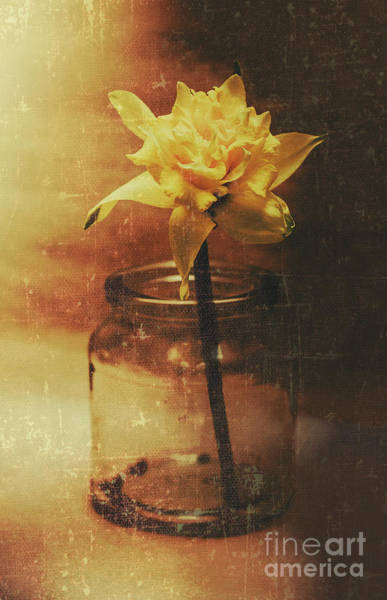 Daffodils Wall Art - Photograph - Vintage Daffodil Flower Art by Jorgo Photography - Wall Art Gallery