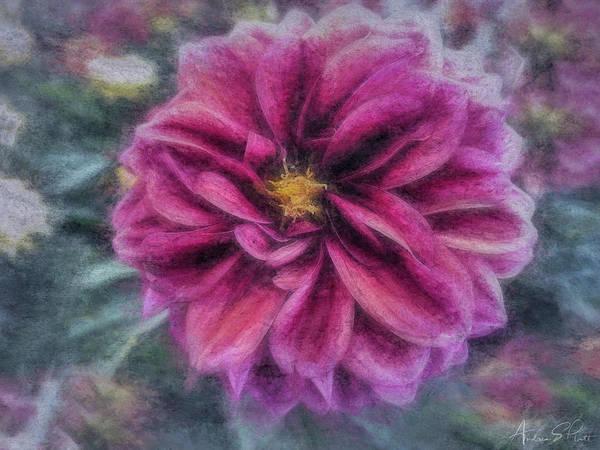 Photograph - Vintage Dahlia by Andrea Platt