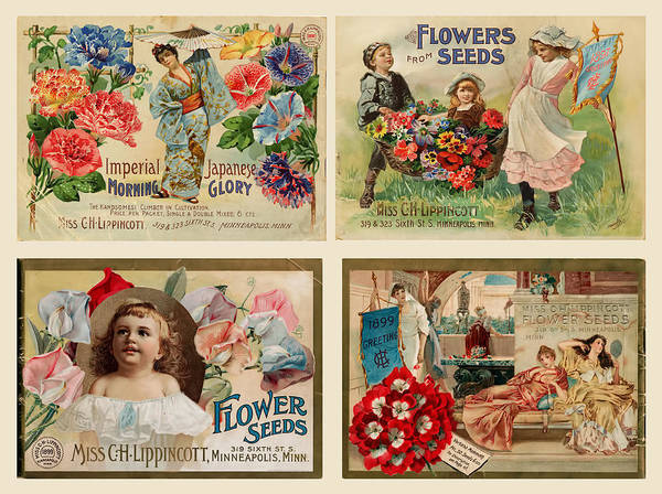 Drawing - Vintage Flower Seed Packets by Peggy Collins