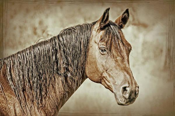 Wall Art - Photograph - Vintage Horse Portrait by Jennie Marie Schell
