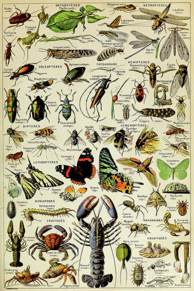 Wall Art - Painting - Vintage Illustration Of Various Invertebrates by Adolphe Philippe Millot