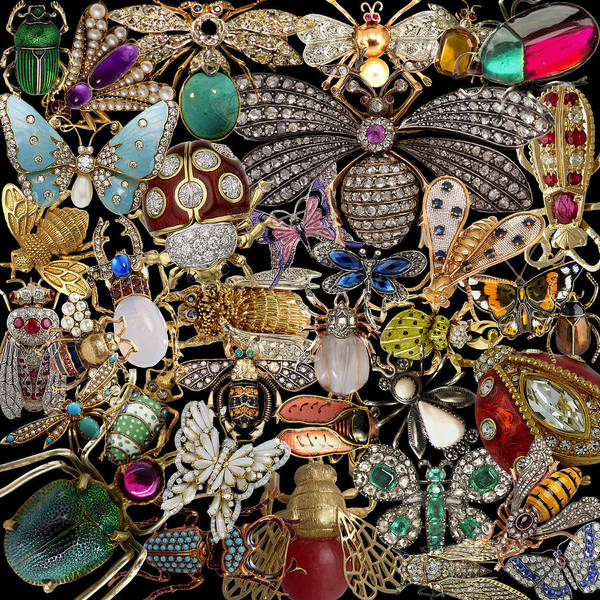 Photograph - Vintage Insect Pins by Andrew Fare