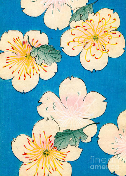 Dogwood Painting - Vintage Japanese Illustration Of Dogwood Blossoms by Japanese School