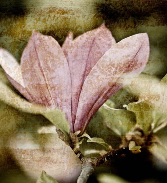 Abstract Flower Mixed Media - Vintage Magnolia by Frank Tschakert