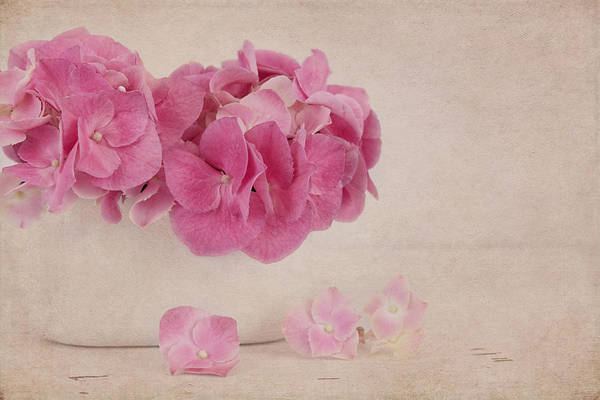 Photograph - Vintage Pink Hydrangea by Kim Hojnacki