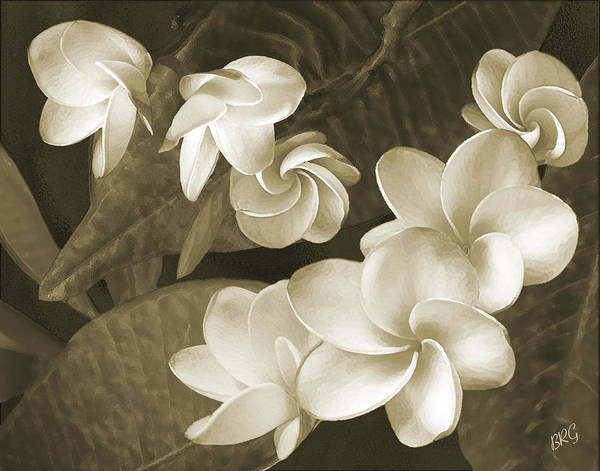 Photograph - Vintage Plumeria by Ben and Raisa Gertsberg