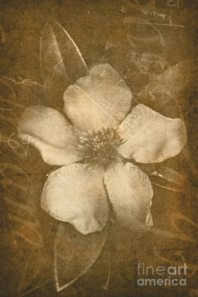 Overlay Photograph - Vintage Postcard Flower by Jorgo Photography - Wall Art Gallery