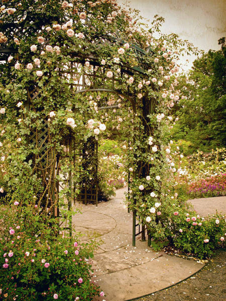 Formal Garden Photograph - Vintage Rose Arbor by Jessica Jenney