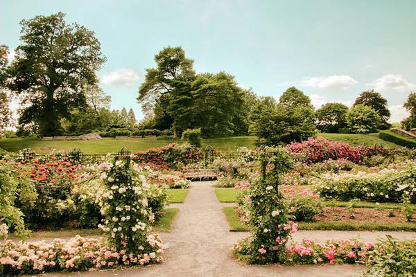 Photograph - Vintage Rose Garden by Jessica Jenney
