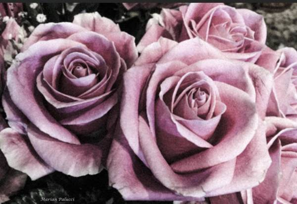 Photograph - Vintage Roses by Marian Palucci-Lonzetta