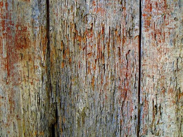 Painting - Vintage Rustic Red Blue Tree Bark Shabby Grunge  by Joy of Life Arts