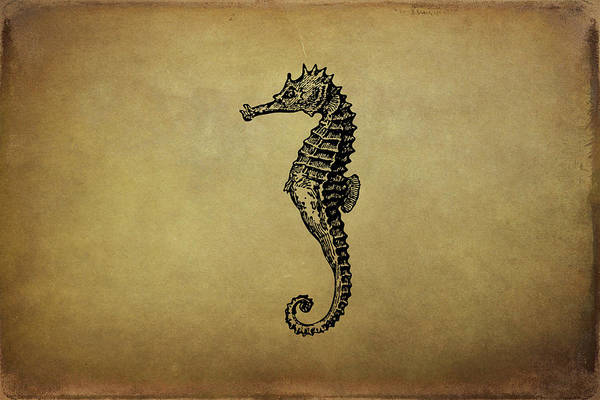 Drawing - Vintage Seahorse Illustration by Peggy Collins