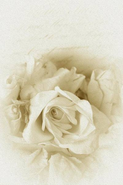 Painting - Vintage Shabby Chic White Rose Script by Joy of Life
