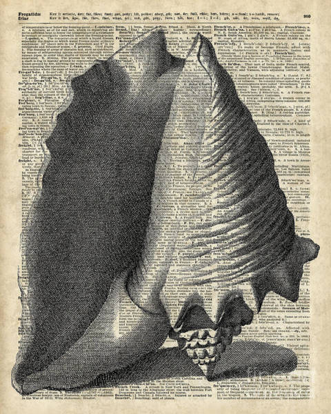 Page Mixed Media - Vintage Shell Over Dictionary Book Page by Anna W