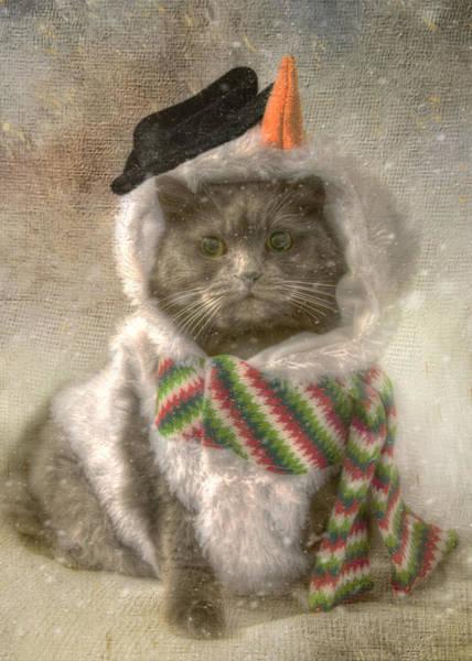 Photograph - Vintage Snowman Grey Cat by Joann Vitali