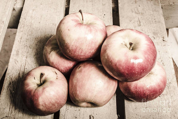 Wall Art - Photograph - Vintage Still-life Apples by Jorgo Photography - Wall Art Gallery