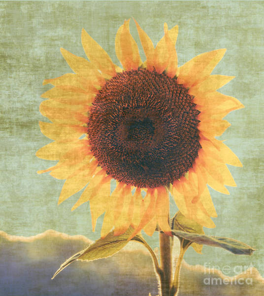 Photograph - Vintage Sunflower by Andrea Anderegg