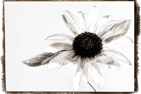 Single Leaf Mixed Media - Vintage Sunflower by Mellissa Ray