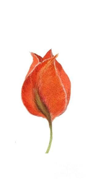 Painting - Vintage Tulip Watercolor Phone Case by Edward Fielding