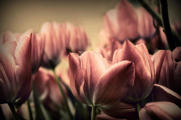 Photograph - Vintage Tulips by Jessica Jenney