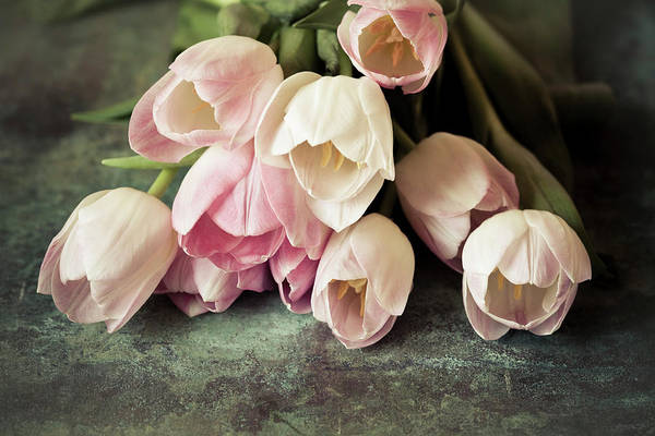 Photograph - Vintage Tulips by Maria Heyens