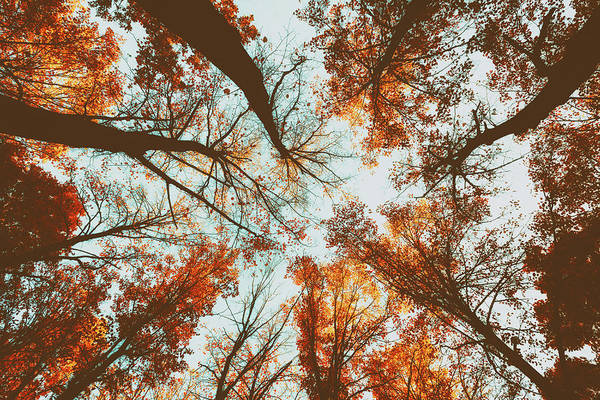 Photograph - Vintage Woodland Sky Reach by John Williams